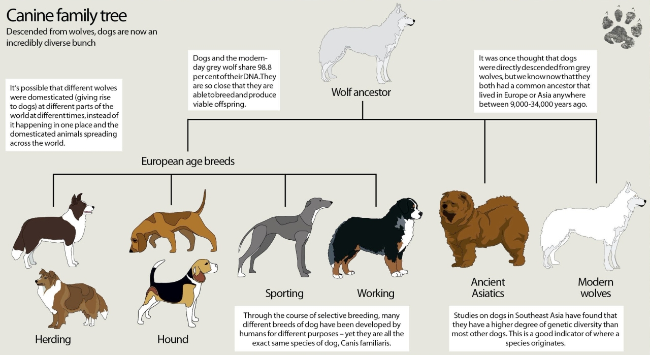 wolf-family-tree